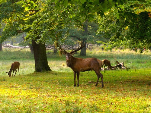 """Deer Park - in Danish """"Dyrehaven"""" is one of the most beautiful places around Copenhagen if you're into deer and forest. In spring and autumn absolutely a most to see - easy to go by train about 20 min north of Copenhagen."""