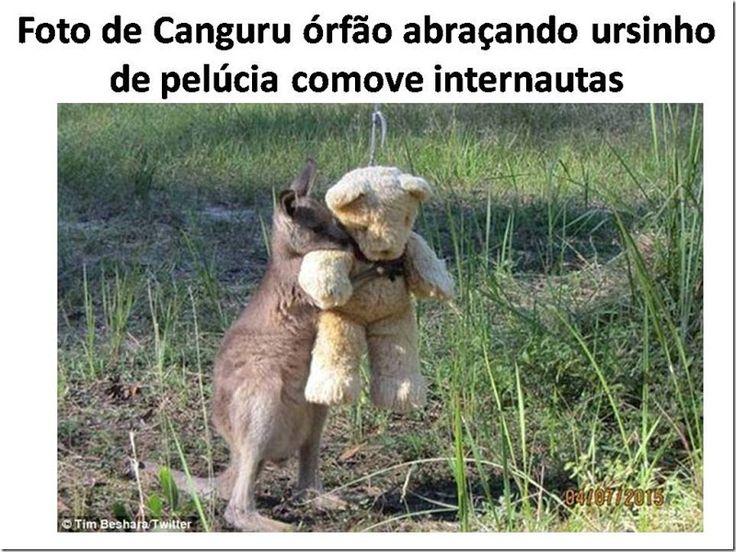 Mural Animal: Foto de Canguru órfão abraçando ursinho de pelúcia comove internautas