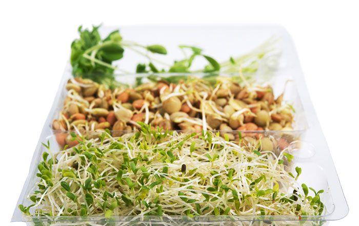 Grodda i köket är lätt att göra, även om du inte vet ett jota om odling av grönsaker i övrigt. Det går extremt fort bara 2-5 dagar från frö till färdig mat. Näringsämnena är koncentrerade i groddarna och det går att använda dem på så många mer sätt än på mackan och i salladen.