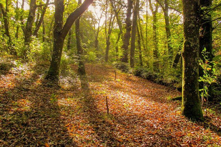 Tipos de bosques de España - http://www.meteorologiaenred.com/tipos-de-bosques-de-espana.html