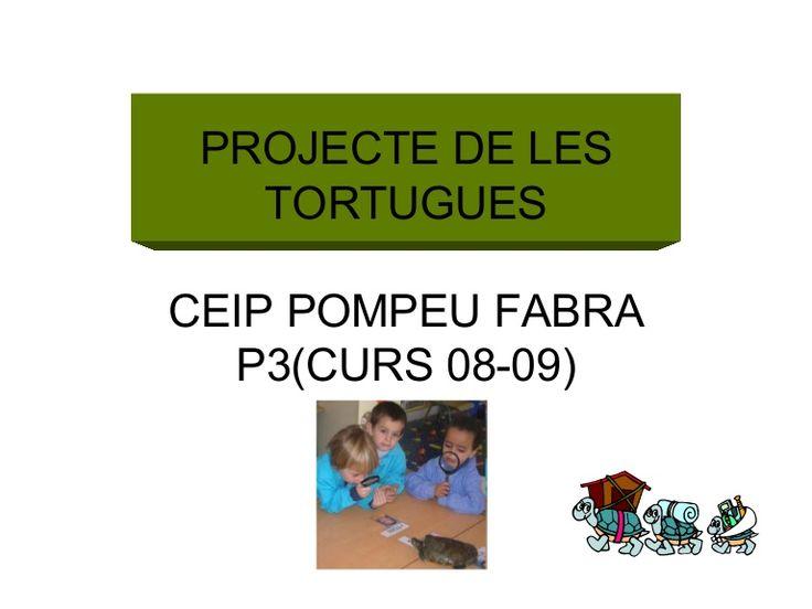 projecte les tortugues