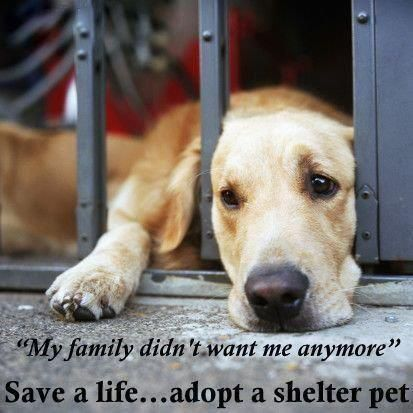 Pitiful...animals are a life time responsibility & commitment. Dogs that are owner surrendered are usually the 1st to be euthanized too as part of shelter procedure.