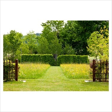 meadow geometrical garden  GAP Photos - Garden & Plant Picture Library - A grass path through a flower meadow ends at a hornbeam hedge: Betula pendula, Carpinus betulus and Ranunculus - Hollberg Gardens - GAP Photos - Specialising in horticultural photography