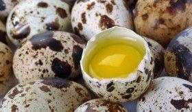 пъдпъдъчите яйца