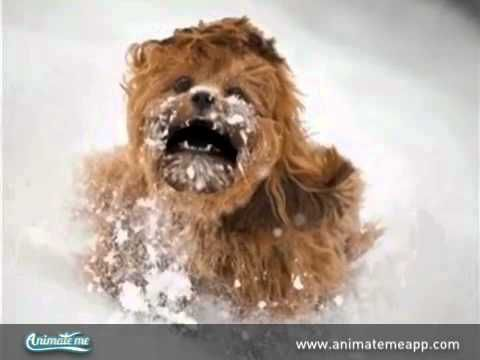 My Talking Pet Chewbacca video made with the free Animate Me app. Download Animate Me for free here: http://www.animatemeapp.com/get