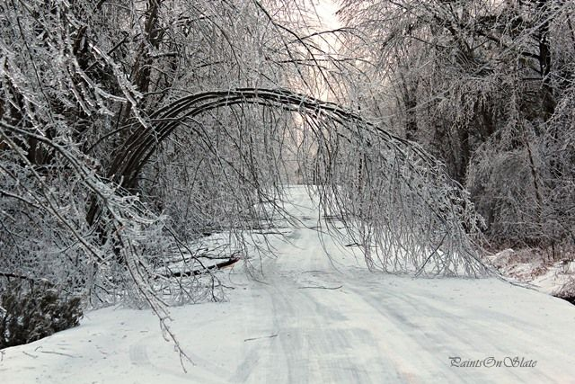 It's a bridge for Squirrels in Winter