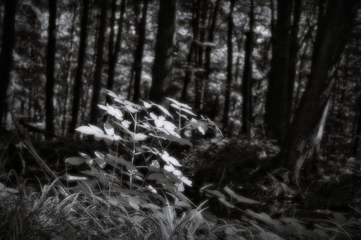 bwstock.photography  //  #forest #undergrowth