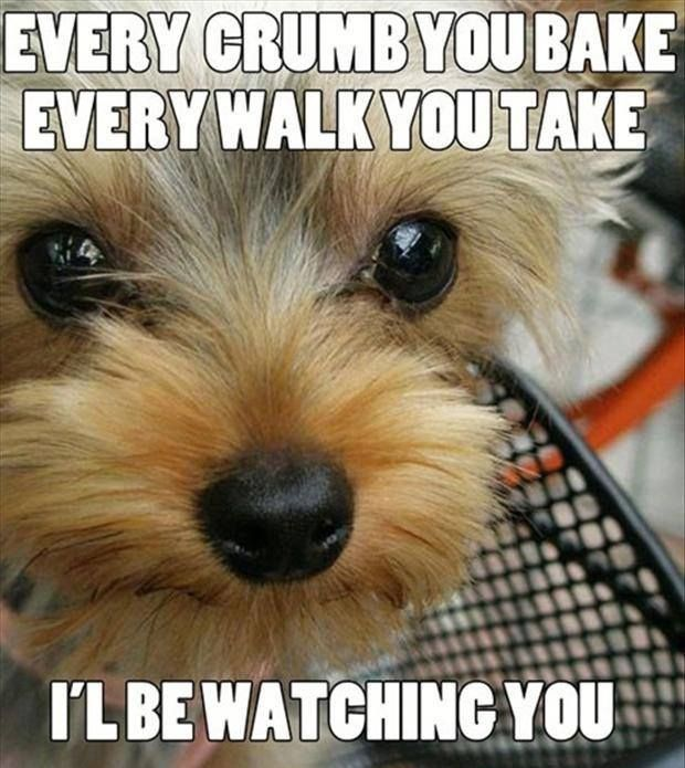I'll Be Watching You.... Funny Animals Dog Puppy Beg Dog