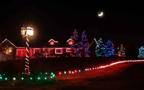 Christmas lighting ideas for beautiful garden