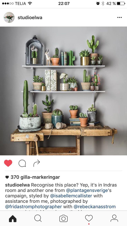 Pin de emma s derberg en storage pinterest plantas - Cactus de interior ...