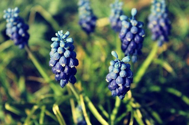фиолетовый сад - Поиск в Google