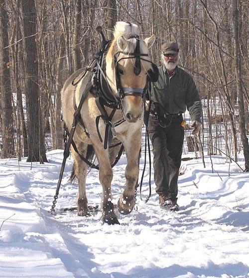 Norsk Wood Works - Norwegian Fjord Horses