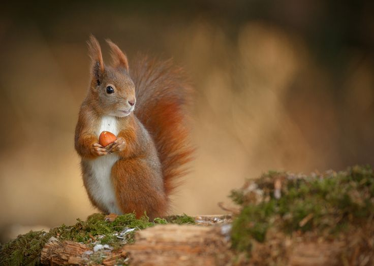 Go nuts for Red Squirrel Week