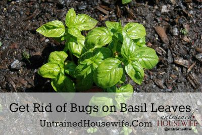 17 Best Images About Garden And House Bugs On Pinterest