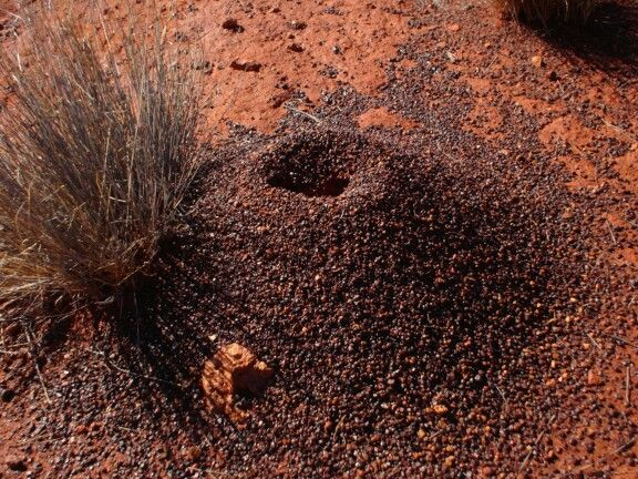 Red centre anthill