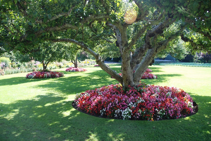 49 best images about under tree garden ideas for mom on for Landscaping rocks under trees