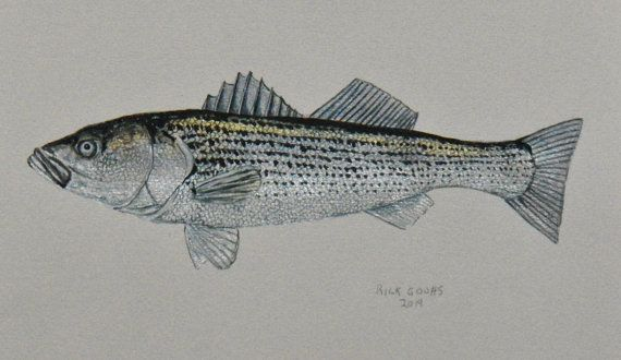 Striped Bass original painting by Goohsnest on Etsy