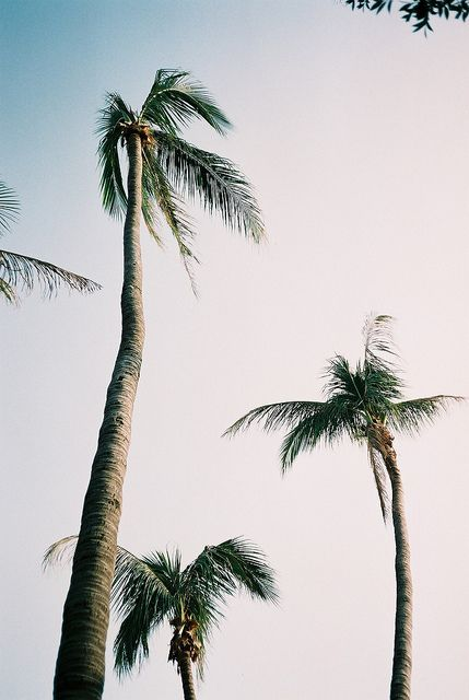 palms at the seaside