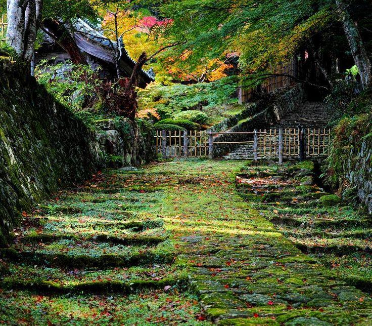 雨が続いてますね。  #滋賀 #紅葉 #セブングリーン #寺  #緑 #自然 #雨 #しっとり  #シグマ #sigma #dp3merrill  #shiga #autumn #autumnleaves  #temple #green #nature #rain  #japaneselandscape #japaneseautumn  #instagram #instagramjapan