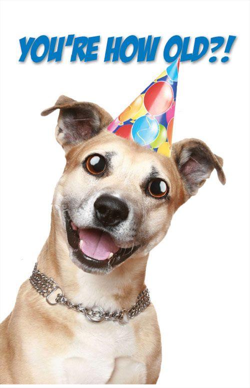 dogbirthday | Happy Birthday - Dog | Birthday | Pinterest ... - photo#24