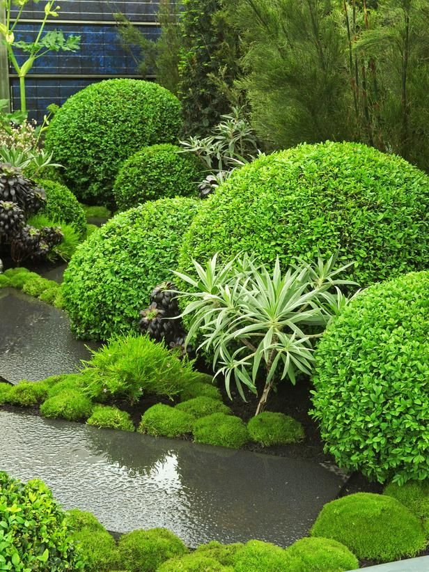 MONOCHROMATIC;  Clipped Topiaries Create Abstract Design using shape and form