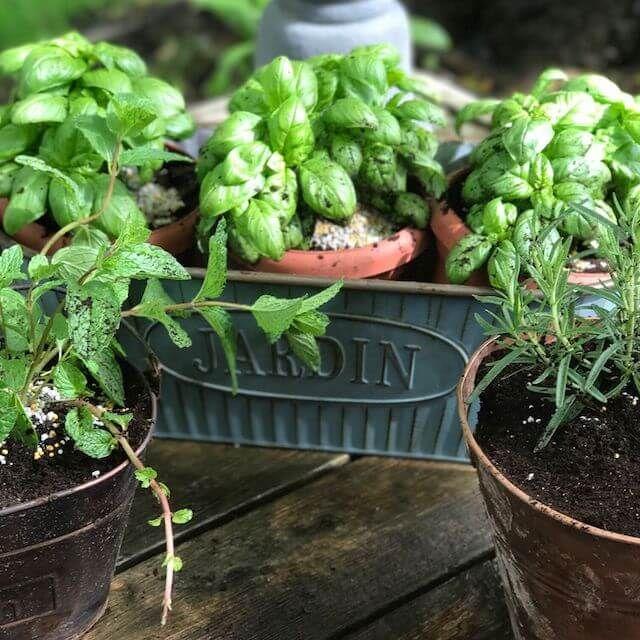 20 Great Herb Garden Ideas: 25+ Best Ideas About Small Herb Gardens On Pinterest