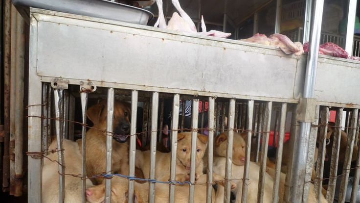 Petition · Governor Jerry Brown: Stop the Brutal Dog and Cat Meat Trade in Canton, China. · Change.org