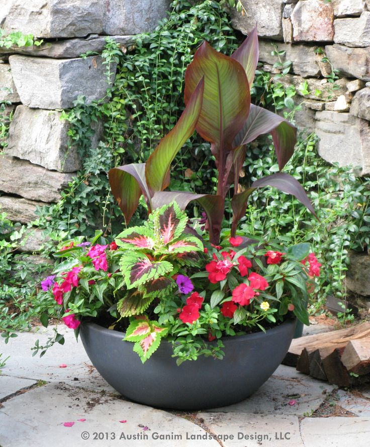 Container Garden Design Ideas this container garden mixes a combination of canna coleus and sunpatiens This Container Garden Mixes A Combination Of Canna Coleus And Sunpatiens