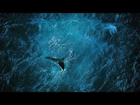"""""""Planet Ocean (2014) - This documentary Planet Ocean, examines our relationship to the ocean and the earth. It's a stunning film, made by the team behind the top rated documentary HUMAN. You can watch the full film here: http://www.filmsforaction.org/watch/planet-ocean-2014/"""""""