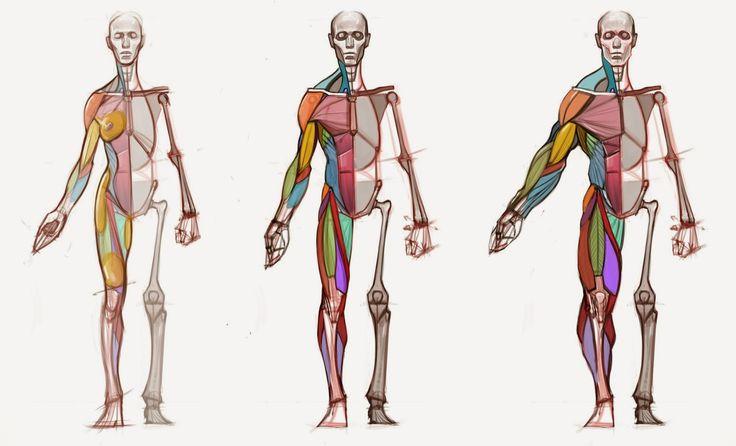 figuredrawing.info_news: Body type diagram