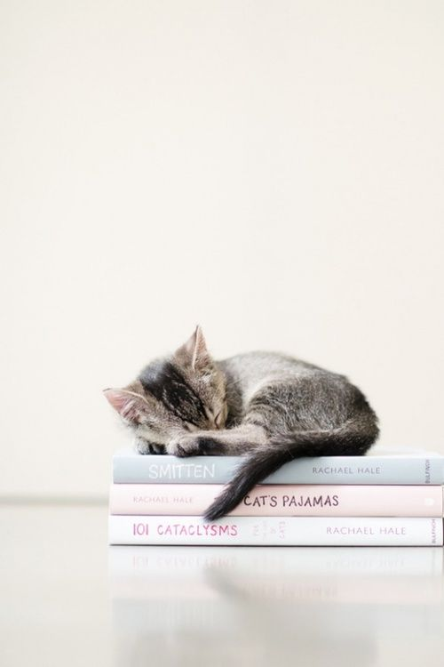 Kittens are so cute, even when they are curled up with a book...
