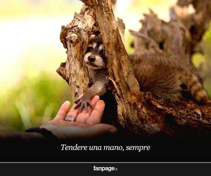 """""""Tendere una mano, sempre"""" #tesorinipelosi"""
