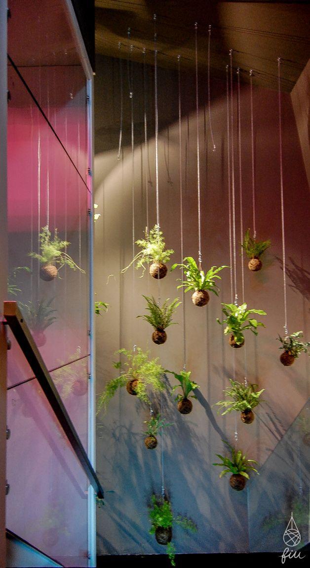 fiu - jardins suspensos na loja Eureka shoes, Rua Sta Catarina, Porto, Portugal