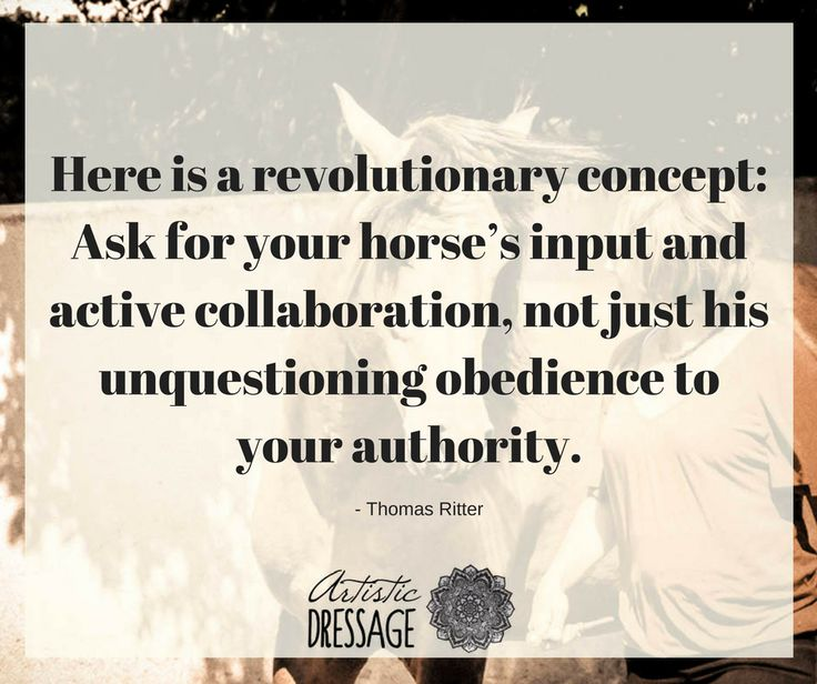 """""""Here is a revolutionary concept: Ask for your horse's input and active collaboration, not just his unquestioning obedience to your authority."""" - Thomas Ritter www.artisticdressage.com"""
