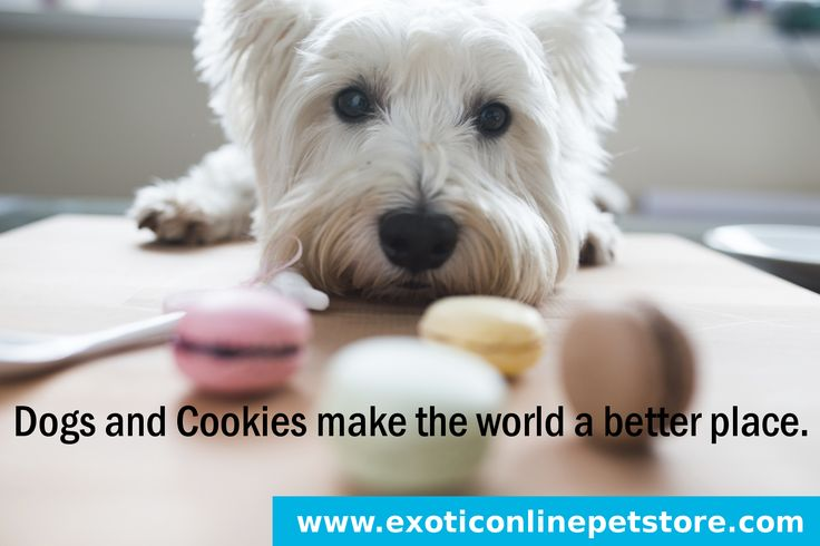 """""""Dogs and Cookies make the world a better place."""" #dogsinlife #cookies #world #better #dogs http://www.exoticonlinepetstore.com/"""