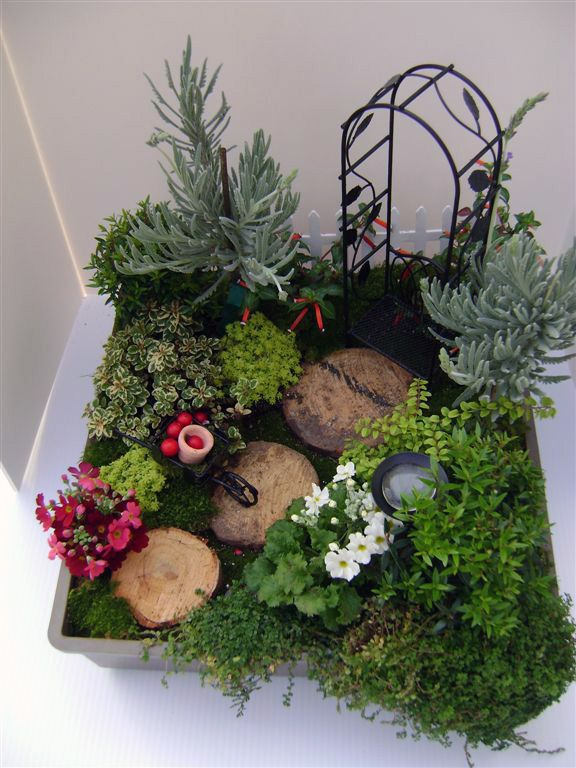 177 best images about fairy mini flower pot gardens on - Miniature plants for fairy gardens ...