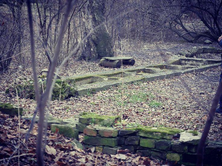 #tracesofthepast #russia #saintpetersburg #spbgu #spbgumovie #spbgumovieproject #spring #landscape #nature #alexrupor #lumixgh4 by alexrupor