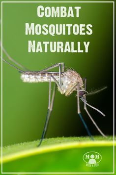Do you want a way to combat mosquitoes without spraying harmful chemicals on your body and yard all the time? Do it naturally!
