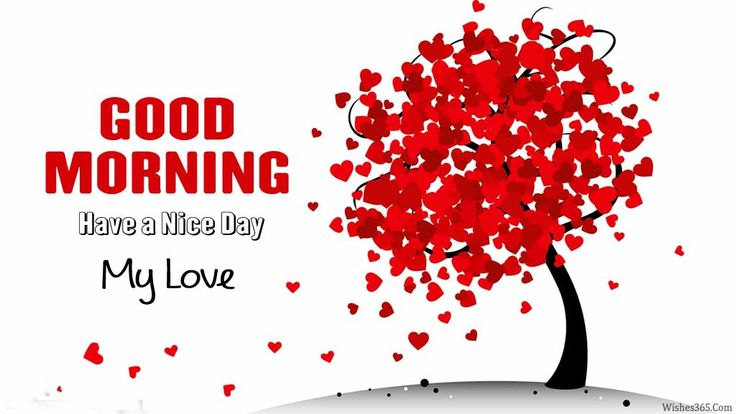 Good Morning My Love Have a Nice Day images, pictures good morning my love images good morning have a nice day images have nice day images,pictures