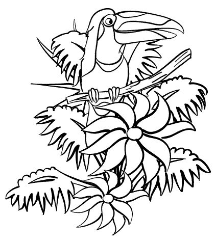 Tropical Rainforest Animals Coloring Pages