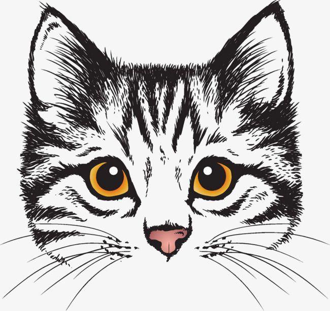 Cute Cat Head Cute Clipart Cat Clipart Head Clipart Png And Vector With Transparent Background For Free Download Cat Face Drawing Cat Clipart Cat Illustration