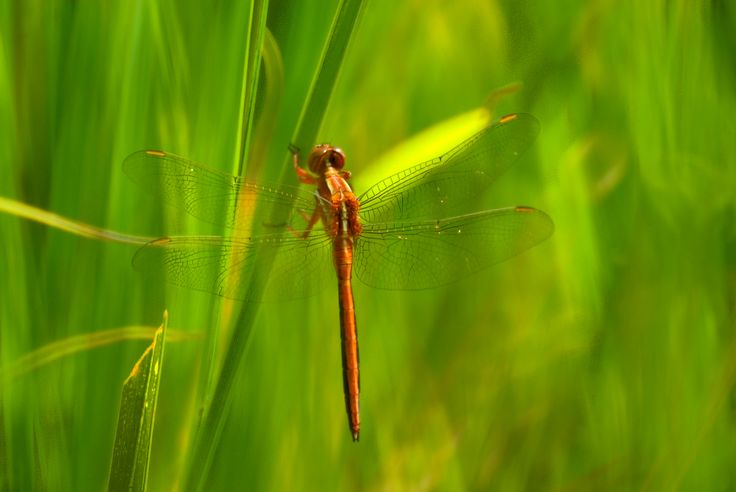Dragonfly by Wolf Avni. #photography #Drakensberg http://www.n3gateway.com/news5/2/151/Wolf-Avni/d,detail.htm