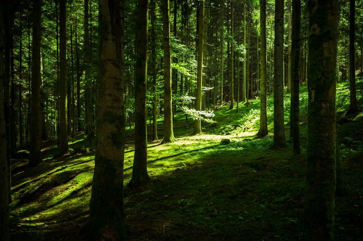 forest shadow by Stefan Schubert on 500px