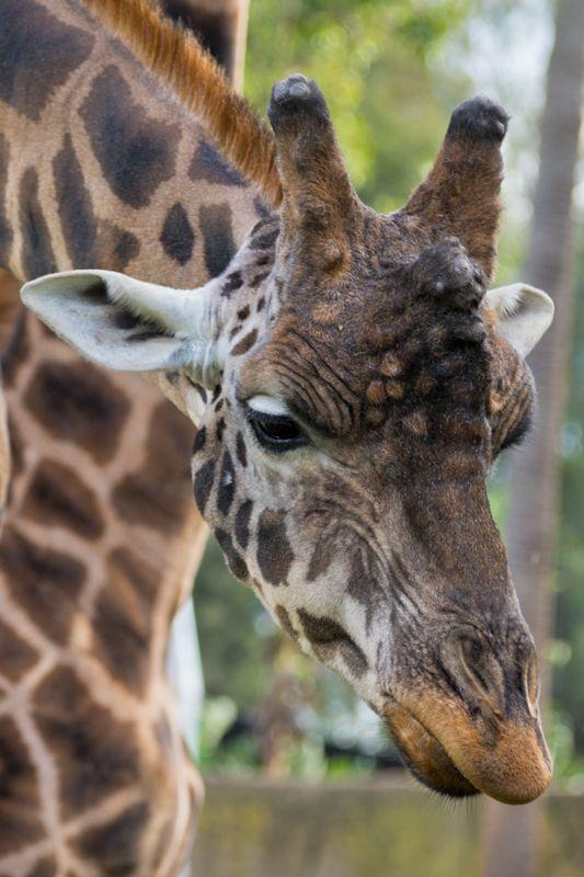Melbourne Zoo - Always Evolving