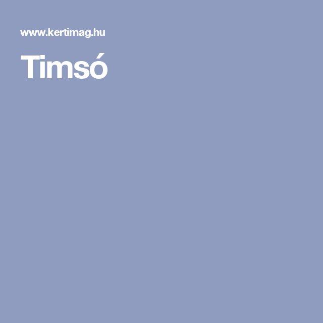 Timsó
