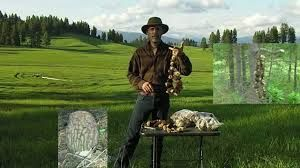 The Homestead Survival | Wild Forest Shrooms | Wild Food Foraging