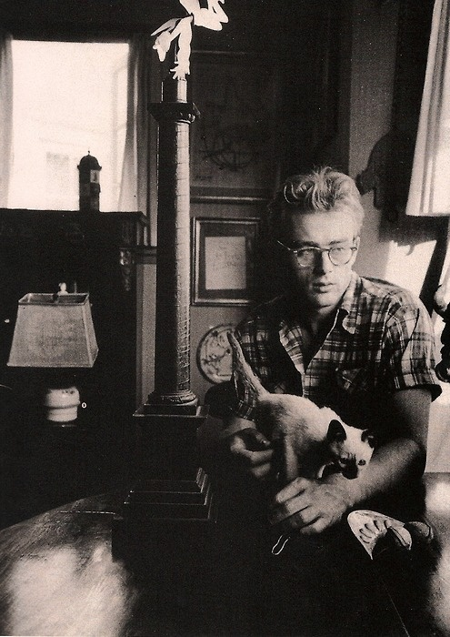 James dean. With the glasses. And the kitty.