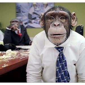 Los 5 rasgos que separan al chimpancé del Social Manager   Comunica que comunica   Comunicación y Social Media by Leire Carrera
