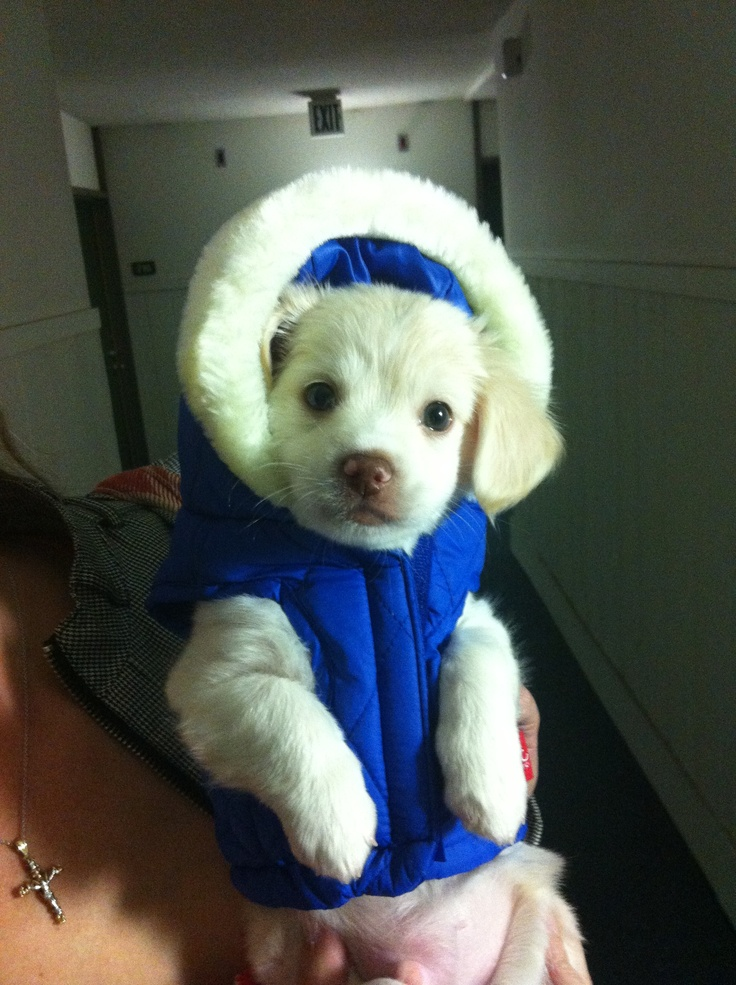 Puppy in a parka!