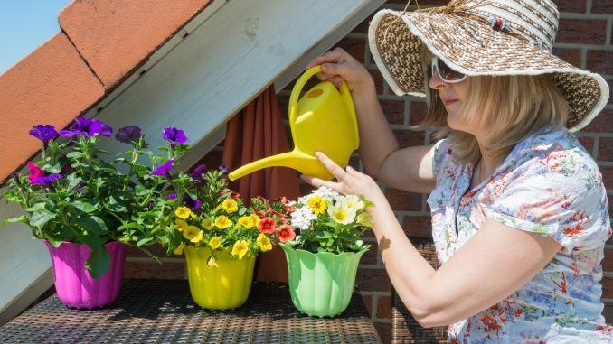 Auf Terrasse oder Balkon bieten sich Hornspäne als Bio-Langzeitdünger in Blumenkübeln und -töpfen an
